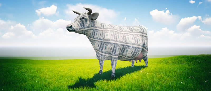 """Cash Cow"", self-directed IRA concept"